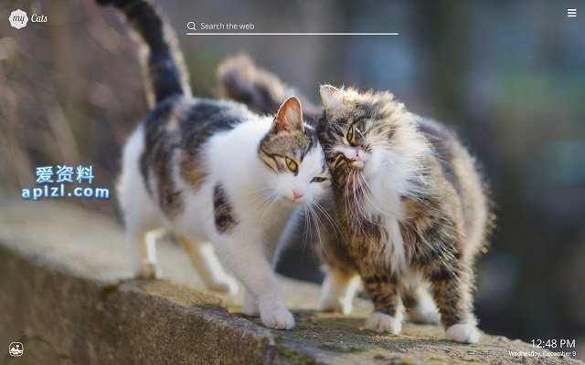 My Cats - Adorable Cat & Kitten Wallpapers 云撸猫必备 谷歌浏览器插件